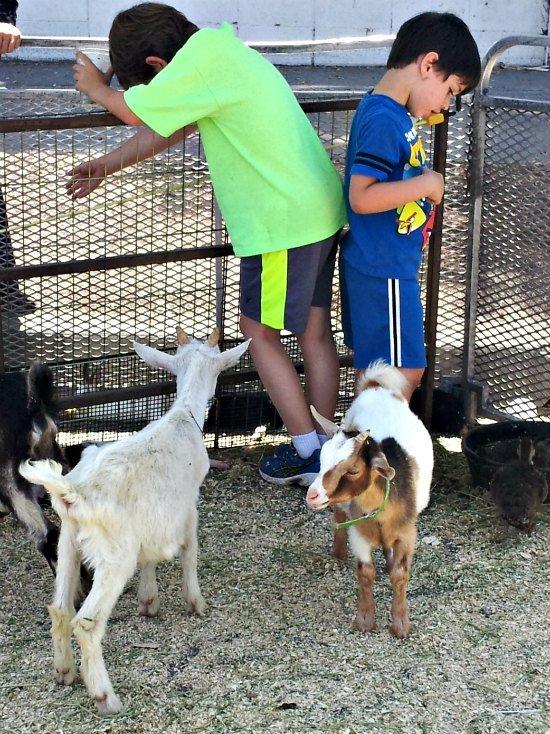 beverly hills farmers market petting zoo